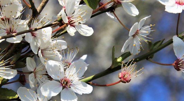 Primavera – i prodotti della terra